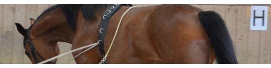 Fascione equitazione per lavoro da terra -Selleria la Colombaia articoli equitazione on line