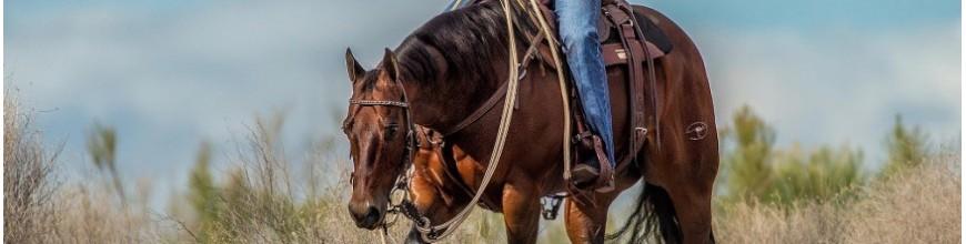 Cowboy Decor Conchos - Selleria la Colombaia articoli equitazione on line