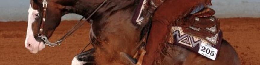 Testiere Western da Show - Selleria la Colombaia articoli per equitazione on line