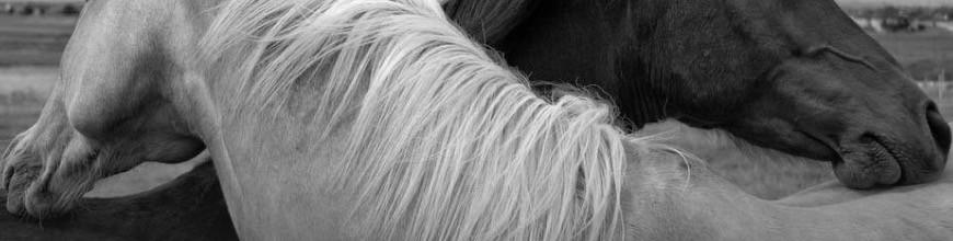 Shampoo Sgroviglianti per cavallo e cane - Selleria la Colombaia articoli equitazione on line