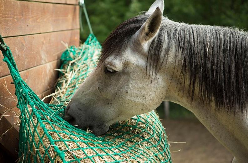 Reti da fieno - per una sana alimentazione del cavallo