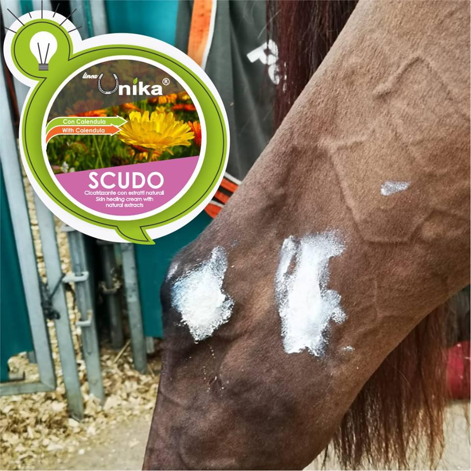 Scudo cicatrizzante cavalli