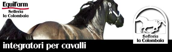 di modo attraente Sconto speciale offrire sconti Selleria Shop, vendita online di accessori per equitazione e ...